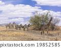 旅行 斑馬 野生動物 19852585