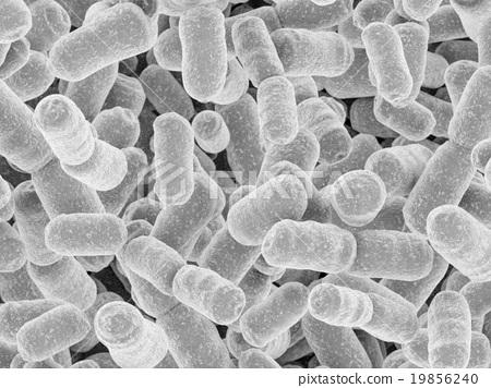 유산균 CG 19856240