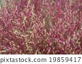 植物 植物學 植物的 19859417