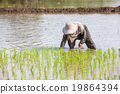 worker plant rice 19864394