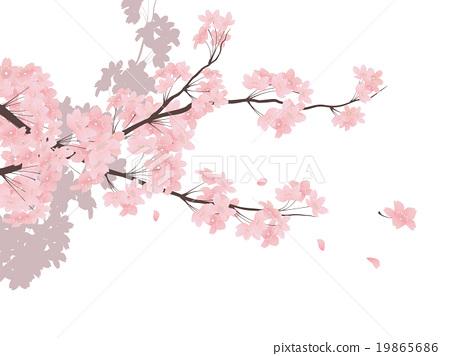 吉野樱花树 19865686