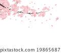 cherry blossom, cherry tree, sakura 19865687