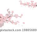 櫻花 櫻 賞櫻 19865689