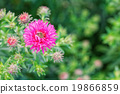 Pink flower with burred background 19866859
