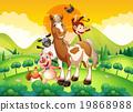 animal horse chicken 19868988