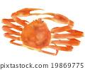 螃蟹 蟹 雪蟹 19869775