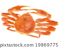 雪蟹 19869775
