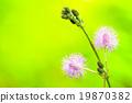 thistle wild flowers 19870382