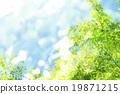 tender, green, verdure 19871215
