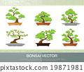 bonsai plant 19871981