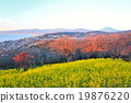 富士山 吾妻山 堆 19876220