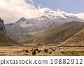Llamas Grazing At The Foot Of The Chimborazo  19882912