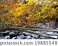 Kinshichu Incinerous Hiking Line 19885548