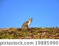 野猫 猫 猫咪 19885990