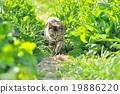 野貓 貓 貓咪 19886220