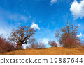 Chestnut Trees in Winter 19887644