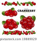cranberry vector fruit 19889029