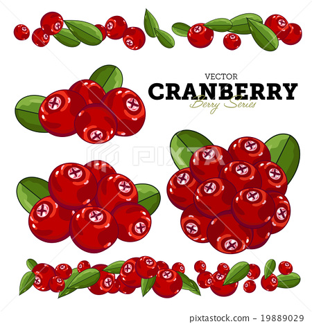 Cranberry Set, Vector. 19889029