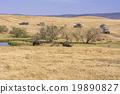 旅行 河馬 樺樹 19890827