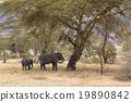 elephant, elephants, safari 19890842