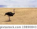 旅行 世界文化遺產舊址 鴕鳥 19890843