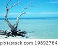 海 大海 海洋 19892764