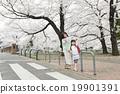櫻花 櫻 賞櫻 19901391