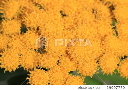 Isogic flowers 19907770
