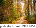 Path lane way pathway in beautiful wild autumn 19913056