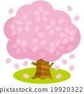 樱桃树B. 19920322