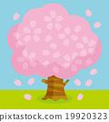 樱桃树C. 19920323