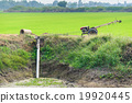 Farmers Pumping water to Jasmine rice fields 19920445