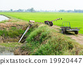 Farmers Pumping water to Jasmine rice fields 19920447