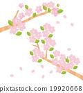 春天 春 櫻花 19920668