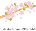 春天 春 櫻花 19920669
