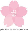 樱花 19920670