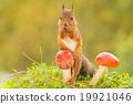 embraced mushroom 19921046