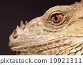 动物 眼睛 目光 19921311