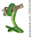 snake painting 19924226