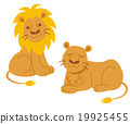 panthera, leo, animal 19925455