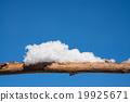 新鮮的雪和南滕 19925671