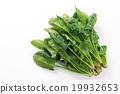 菠菜4 19932653