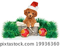 Christmas poodle puppy 19936360