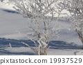 얼음 꽃 19937529