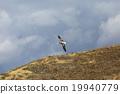 信天翁 飛行 航班 19940779