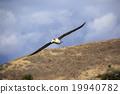 信天翁 飛行 航班 19940782
