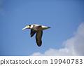 信天翁 飛行 航班 19940783