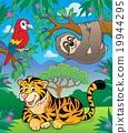 animal, animals, sloth 19944295