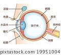 眼睛 目光 剖面圖 19951004
