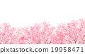 cherry blossom, cherry tree, sakura 19958471